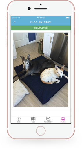 Photos for every appointment with Scout for Pet Owners on iOS
